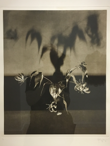 Robert Mapplethorpe (1946-1989) - Untitled (Floweres), 1983.