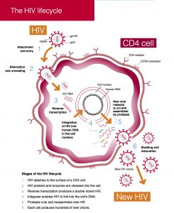 ART in pictures 2 - HIV lifecycle