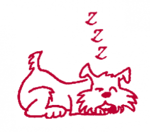 Arti in pictures - sleeping dog
