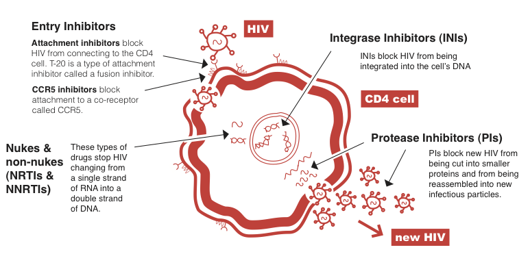 HIV lifecycle 2013 no txt