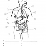 Organs of the body test